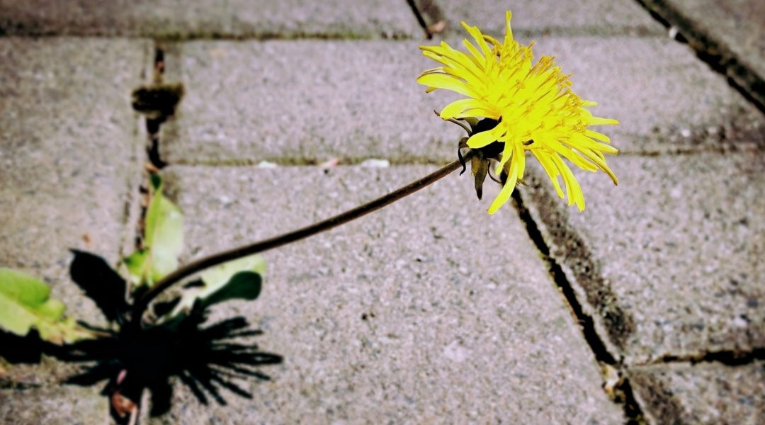 3 Ways to Prevent Weed Growth Between Paving Stones